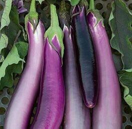 Eggplant-Ping-Tung