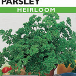 PARSLEY MOSS CURLED HEIRLOOM SEEDS