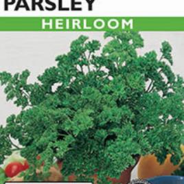 PARSLEY MOSS CURLED HEIRLOOM SEEDS