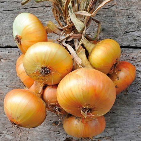 Onion Sweet