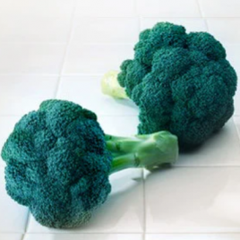 Broccoli Plant Diplomat HG 3.5″