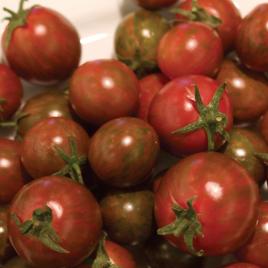 Tomato Plant Hybrid Black Zebra Cherry HG 3.5″