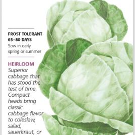 Cabbage Copenhagen Market