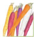 Carrot Calliope Blend