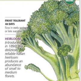 Broccoli Di Cicco Org