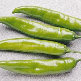Pepper Plant Garden Salsa HG 3.5″