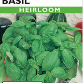 Lettuce Leaf Basil Heirloom Seeds