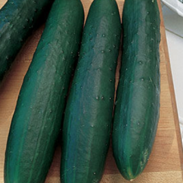 Cucumber Marketmore Plant Pac