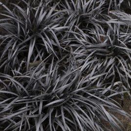 GRASS MONDO BLACK NIGRA 1G