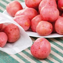 POTATO RED NORLAND SEED