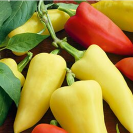 Pepper Plant Pretty 'N Sweet HG 3.5″