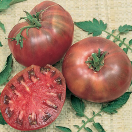 Tomato Plant Heirloom Cherokee Purple HG 3.5″