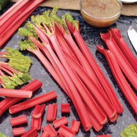 RHUBARB CANADIAN RED