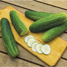 Cucumber Plant Straight Eight HG 3.5″