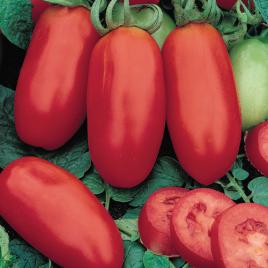 Tomato Plant Heirloom San Marzano HG 3.5″
