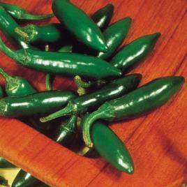Pepper Plant Serrano Chili HG 3.5″