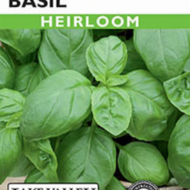 Sweet Italian Heirloom Basil Seeds