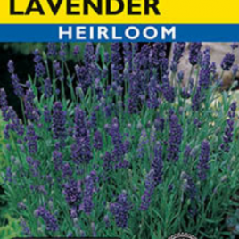 LAVENDER TRUE HEIRLOOM SEEDS