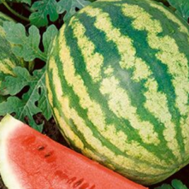Watermelon Crimson Sweet Plant Pac