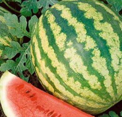 waatermelon