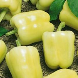 Pepper Plant White Bell HG 3.5″