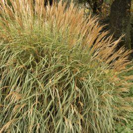 GRASS ADAGIO 2G