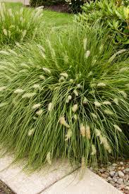 GRASS HAMELN 2G