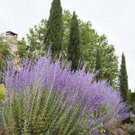 Sage Plant HG 3.5″